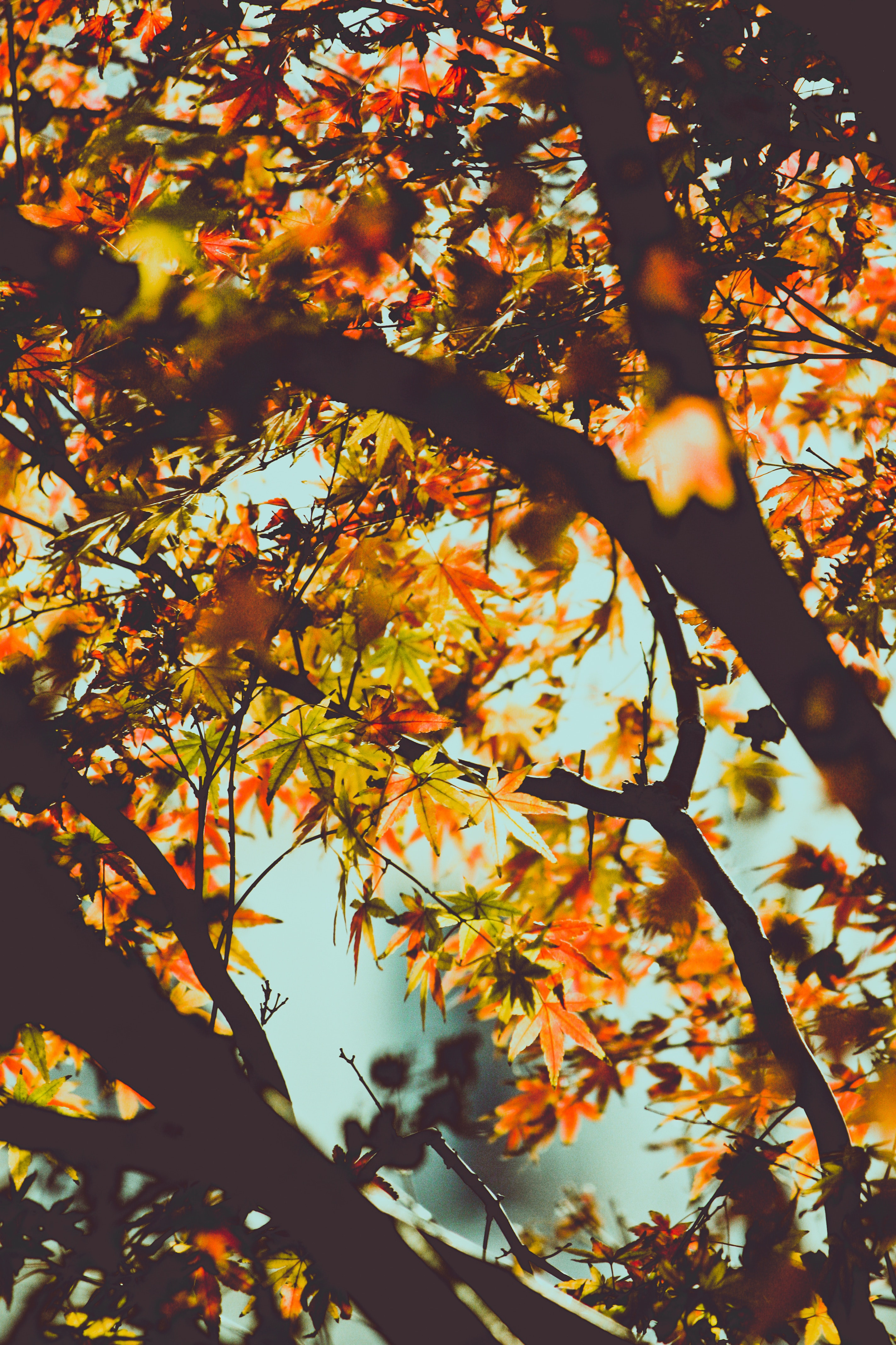 Kostenloses Foto Zum Thema Baum Blatter Herbst