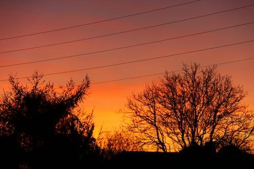 Darmowe zdjęcie z galerii z czerwony, drzewa, niebo, pomarańcza