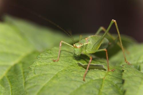 Immagine gratuita di cimice, insetto, macro, primo piano