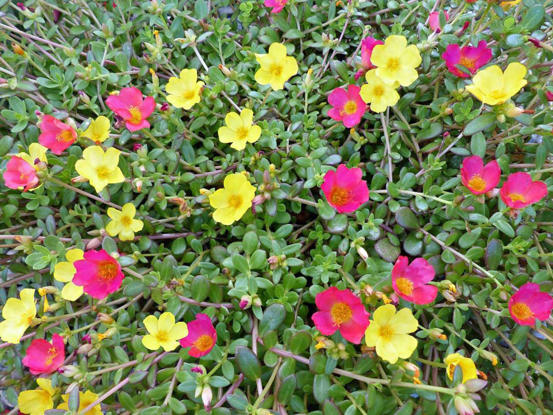 Free stock photo of beautiful flowers