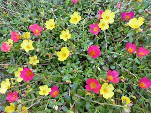 美しい花の無料の写真素材