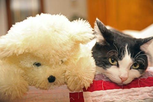 Δωρεάν στοκ φωτογραφιών με Γάτα