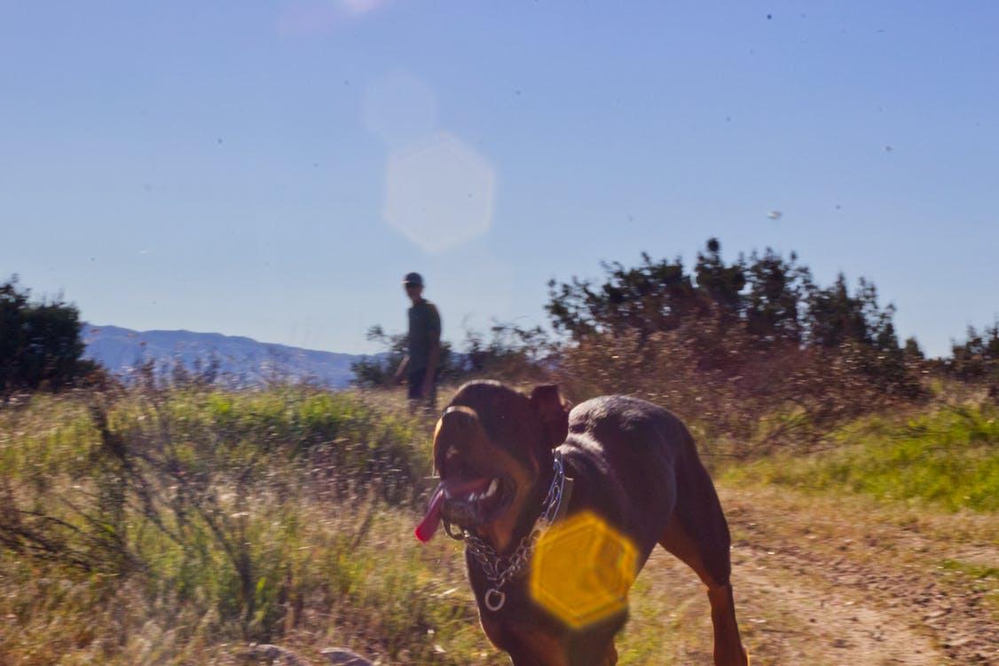 Gratis lagerfoto af hund, hund løbende, hund udenfor