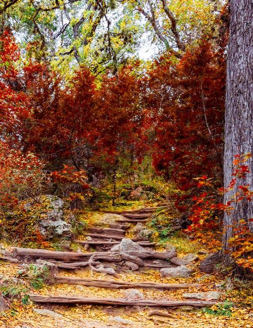 オレンジ, 林道, 森林の無料の写真素材