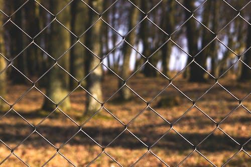 Foto profissional grátis de arame, árvores, cerca, close