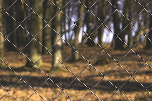 Black Steel Fence With Tree Trunks