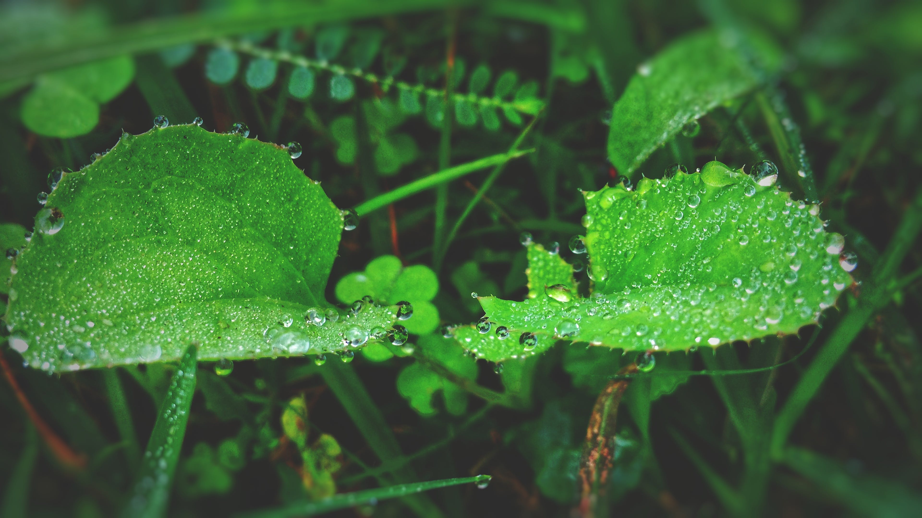 Green Leaf Plant With Raindrops