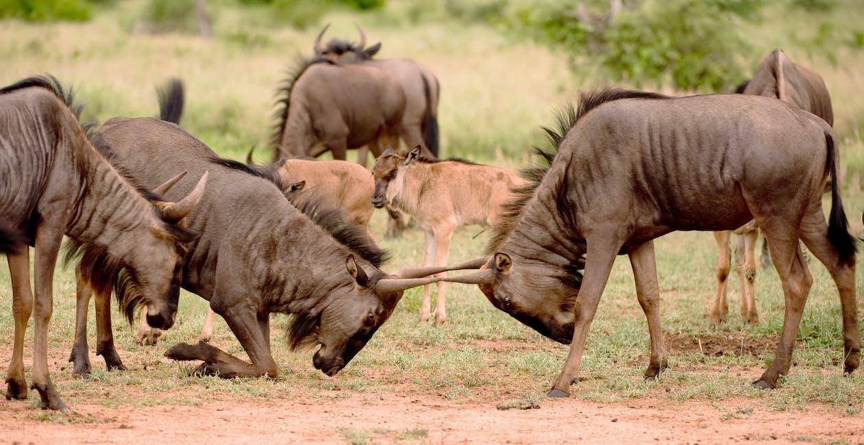 Free stock photo of animal, safari, wild animals