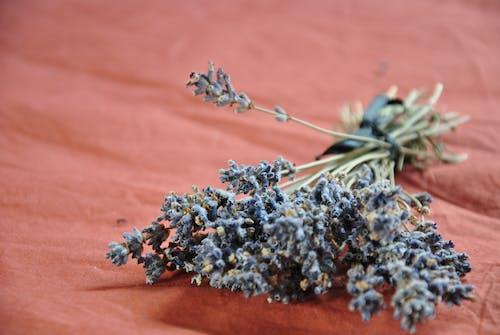 Kostnadsfri bild av lavendel, lavendel-