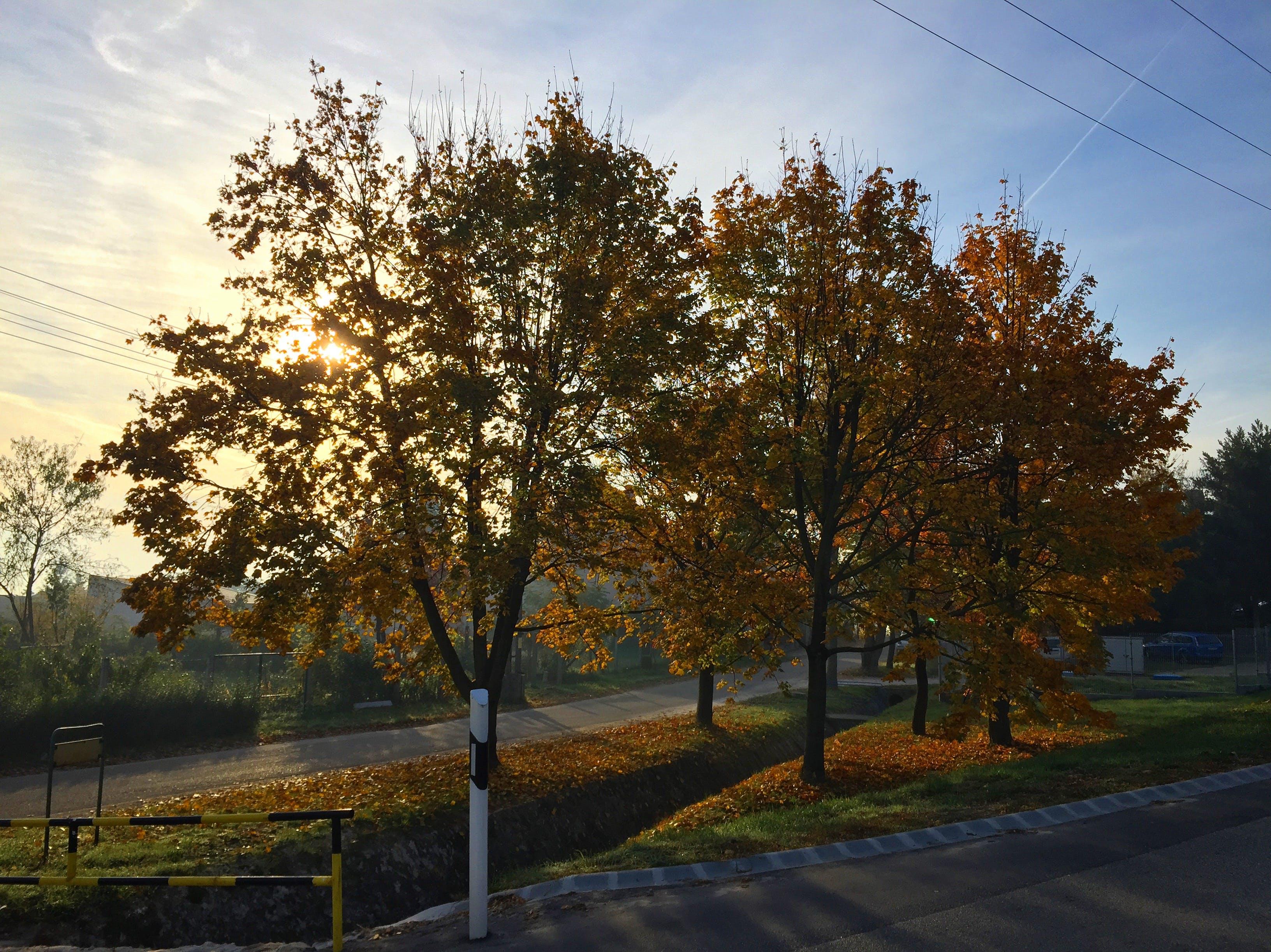 Free stock photo of #autumn #nature #naturephoto #color