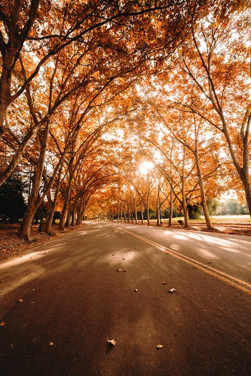 Asphalt road with trees on sunny autumn day