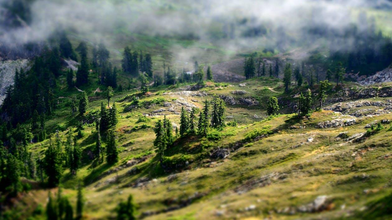 dagsljus, dimma, gräs