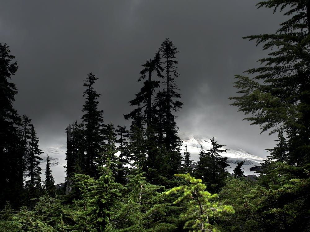 Gratis stockfoto met berg, Bos, gletsjer