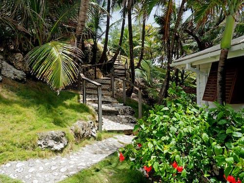 Gratis lagerfoto af hotel, kro, palmetræ, Paradis