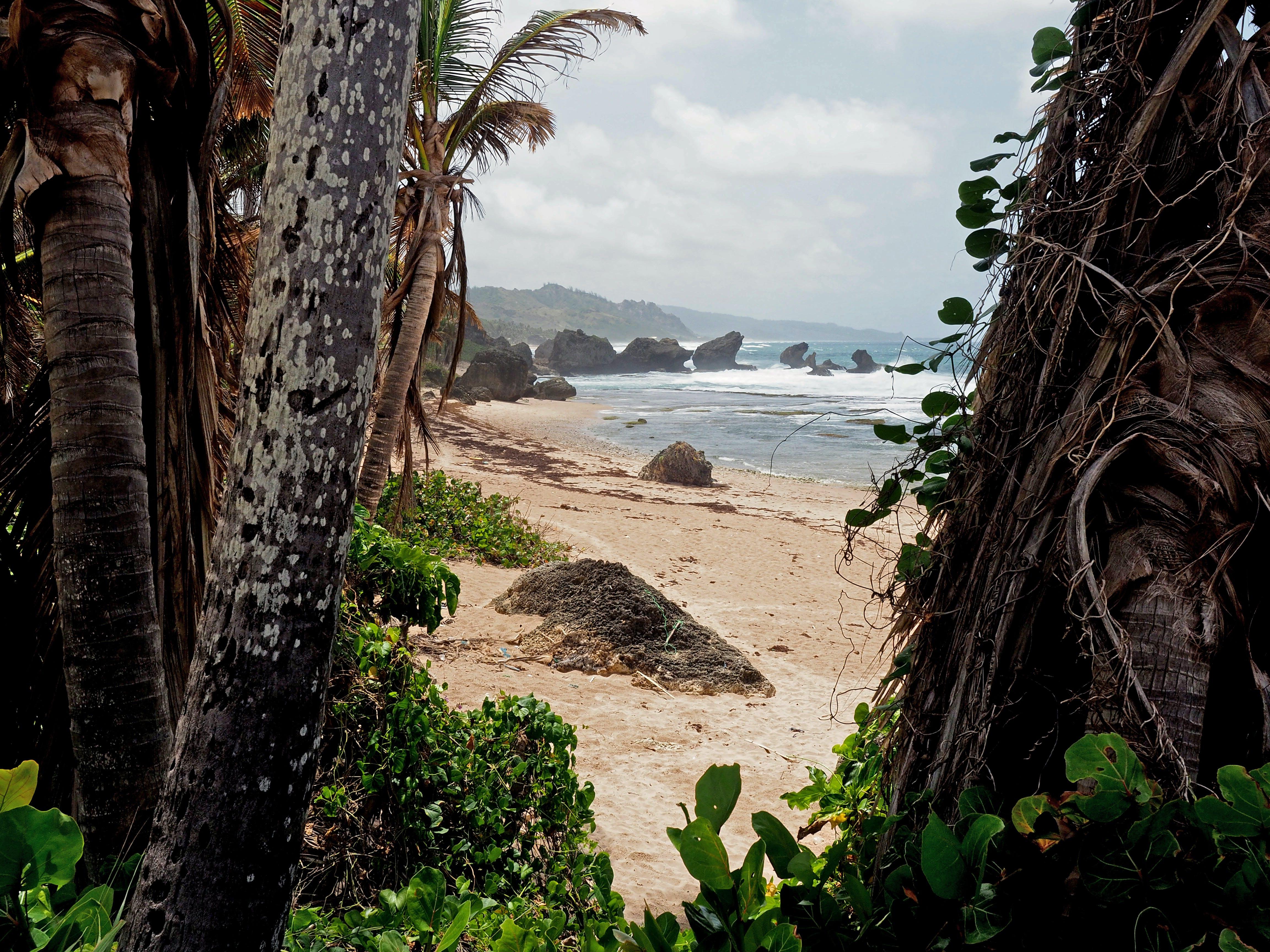 Free stock photo of beach, palm trees, travel, trees