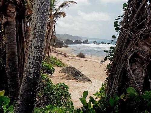Gratis lagerfoto af bølger, palmer, strand, træer