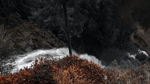 Gratis lagerfoto af natur, park, pnw, udforske