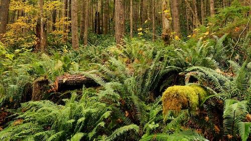 Gratis lagerfoto af biodiversitet, bregner, frodig, jord