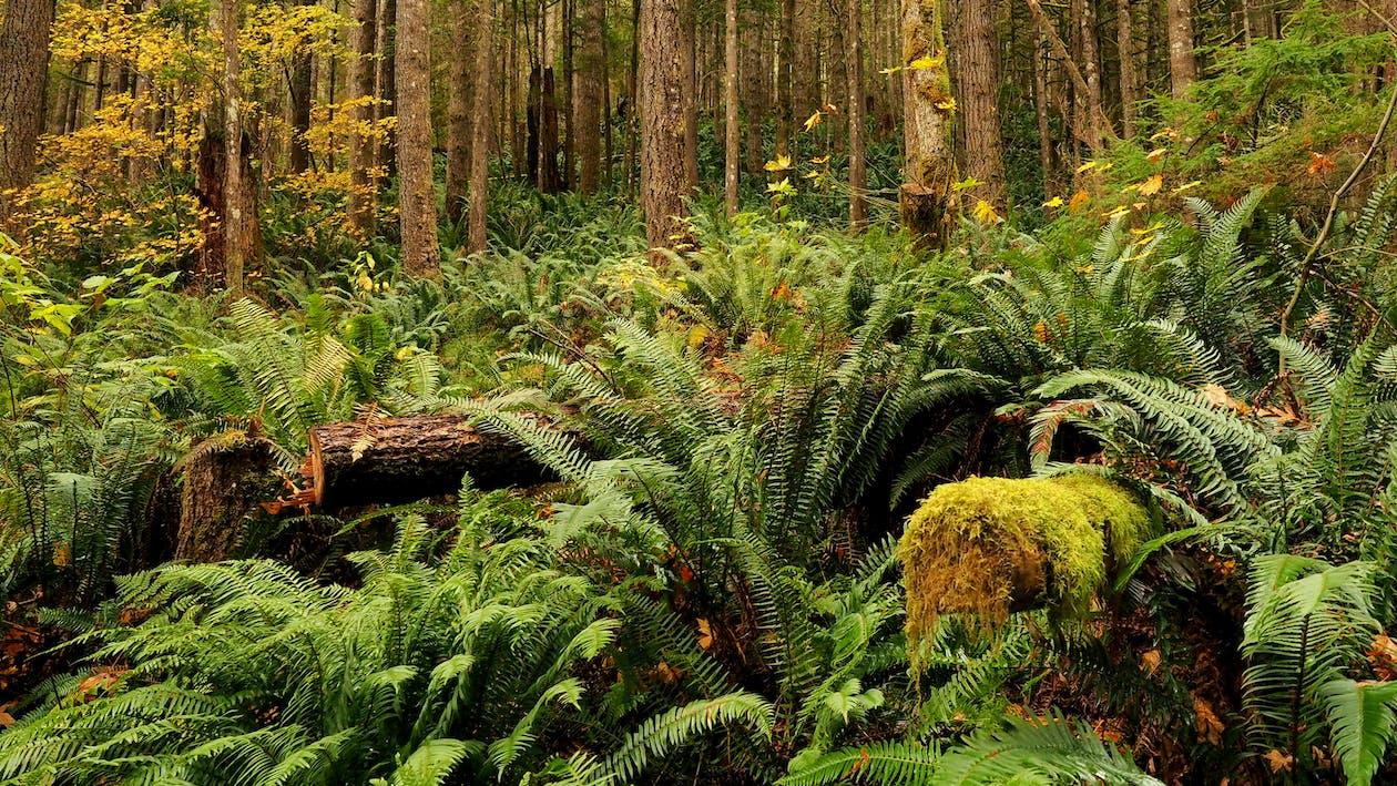 Free stock photo of biodiversity, earth, ecosystem