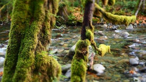 Gratis lagerfoto af å, mos, natur, pnw