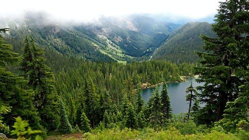 Gratis lagerfoto af greem, nord vest, refleksion, skov