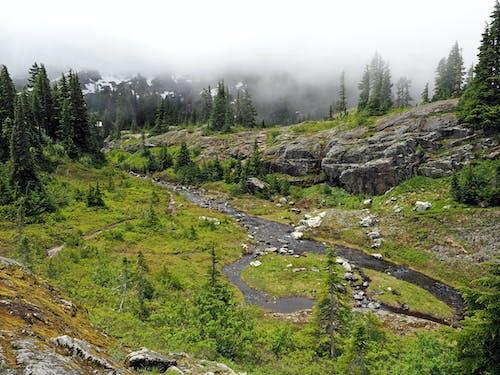 Gratis lagerfoto af å, mut, nord vest, skov