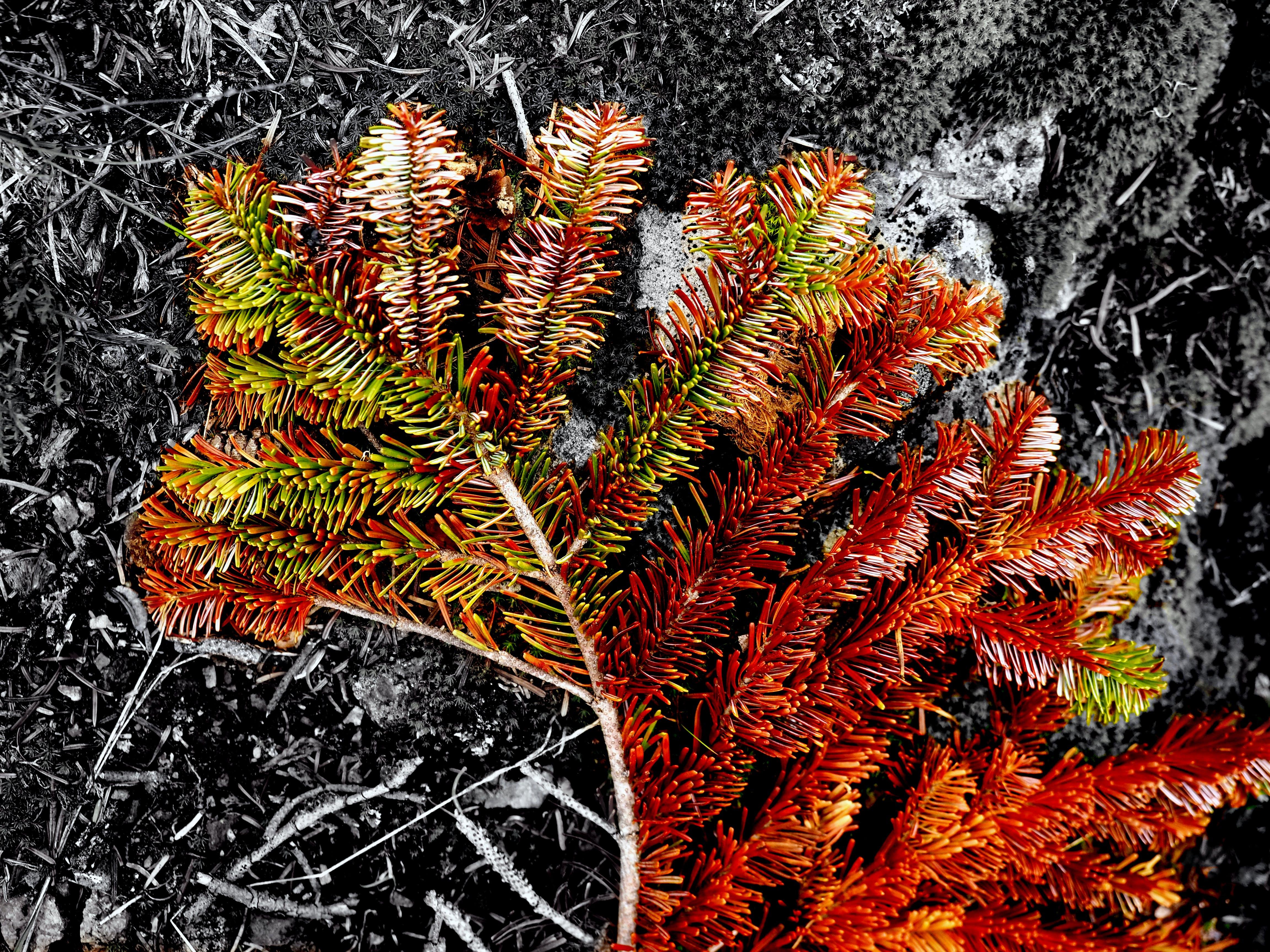 Free stock photo of autumn, forest, mono, nature
