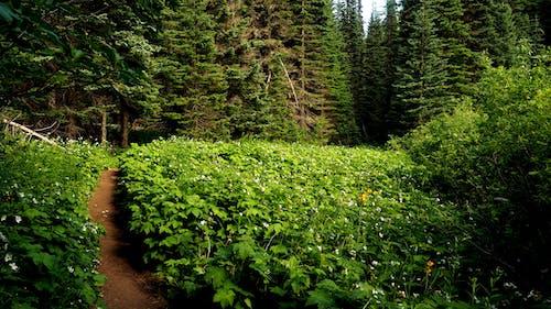 Gratis lagerfoto af frodig, grøn, nord vest, pnw
