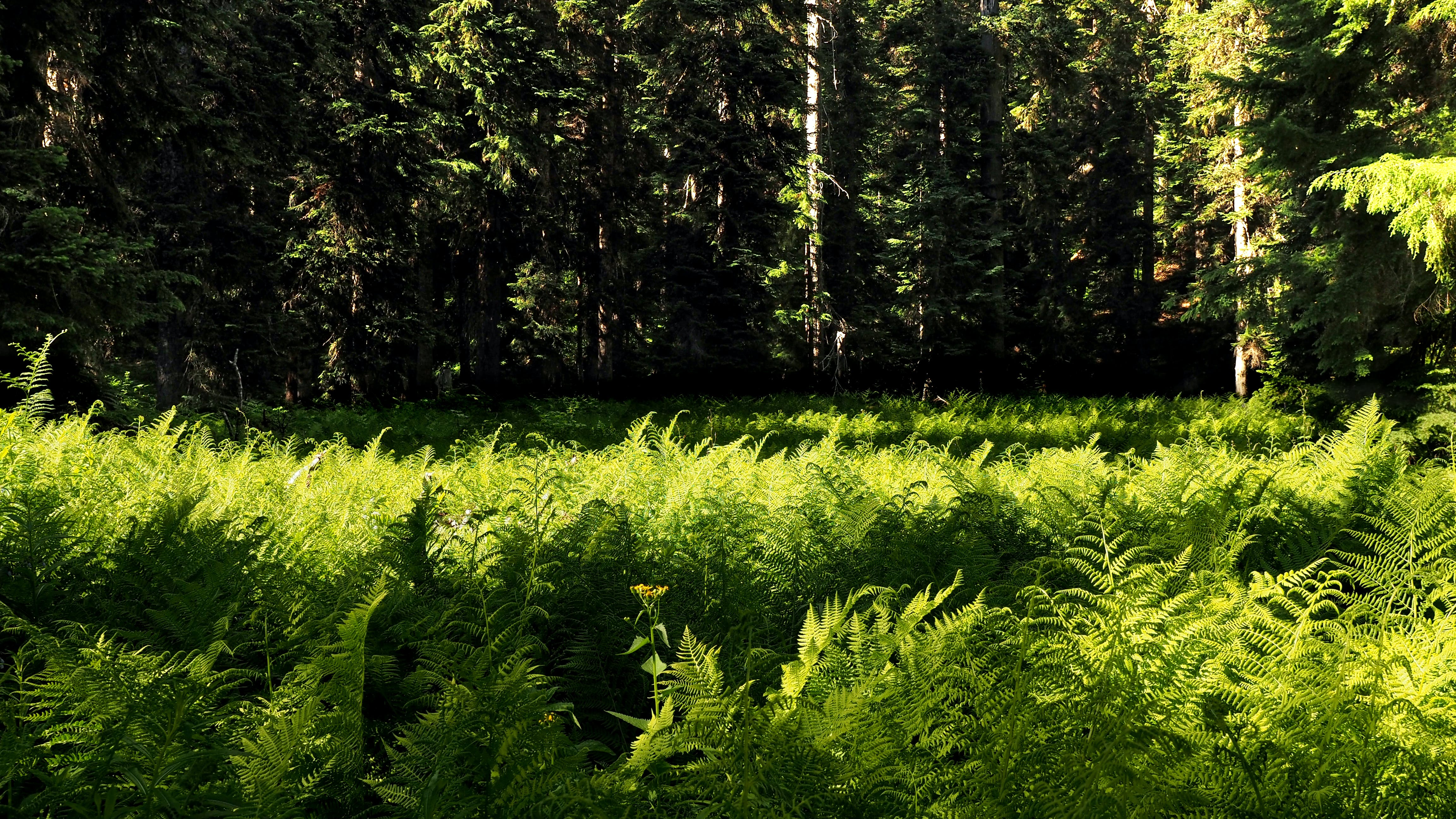 Free stock photo of ferns, forest, light, nature