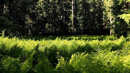 Gratis lagerfoto af bregner, lys, natur, nord vest