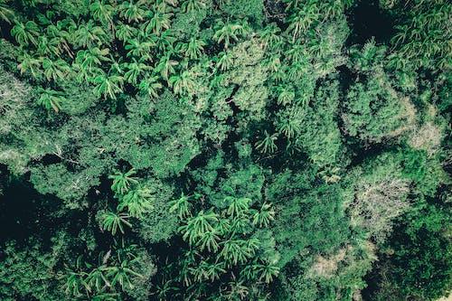 Immagine gratuita di acqua, albero, ambiente