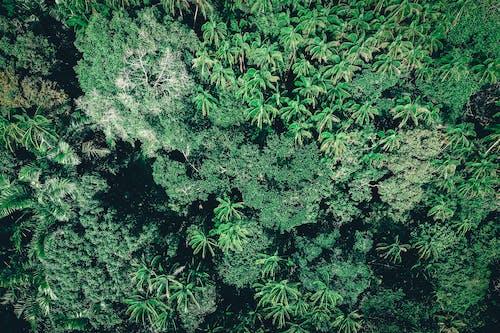 Immagine gratuita di agricoltura, albero, canapa