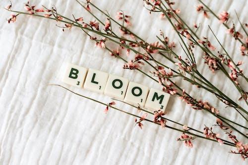 Free stock photo of april, beautiful flowers, beauty
