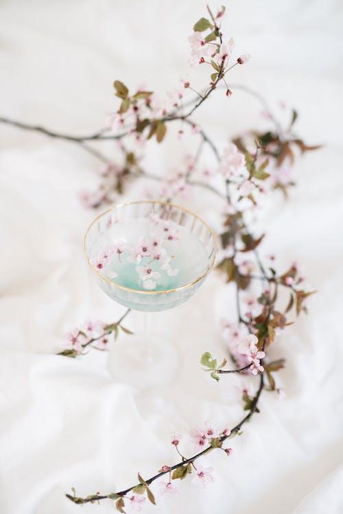 Бесплатное стоковое фото с весна, ветвь, вишня