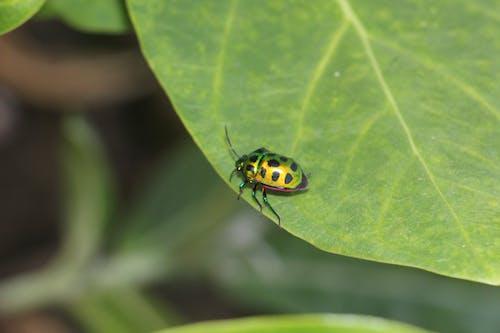 Бесплатное стоковое фото с зеленый лист, насекомое