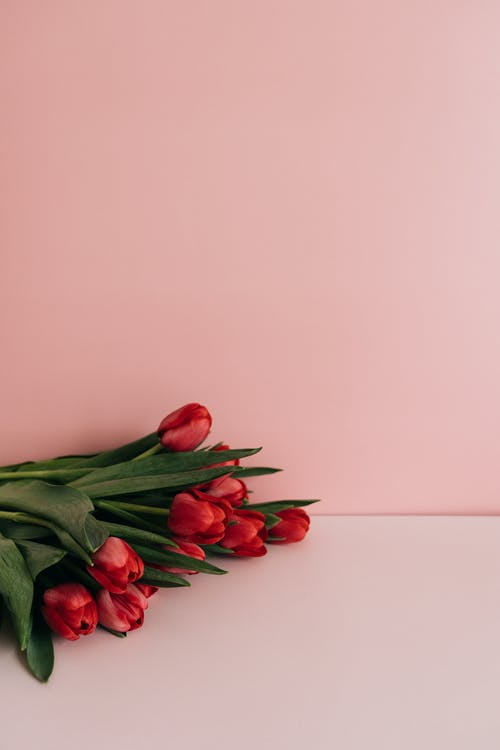 Immagine gratuita di amore, bouquet, buccia