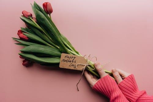 Immagine gratuita di amore, buccia, cibo