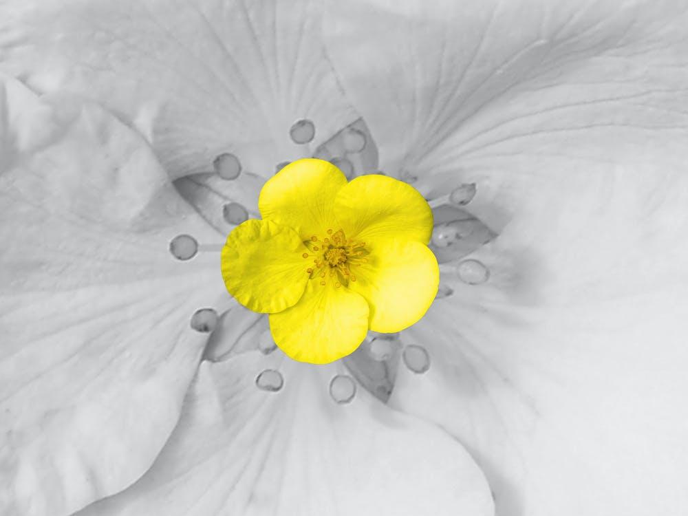 개화, 그레이, 꽃