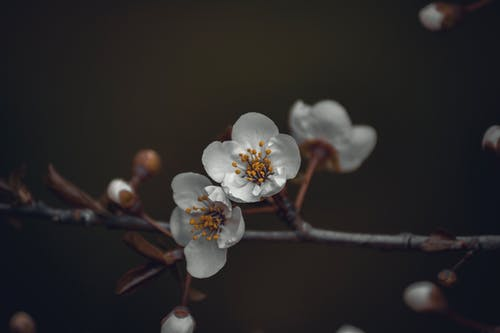 Blooming flowers on thin branch