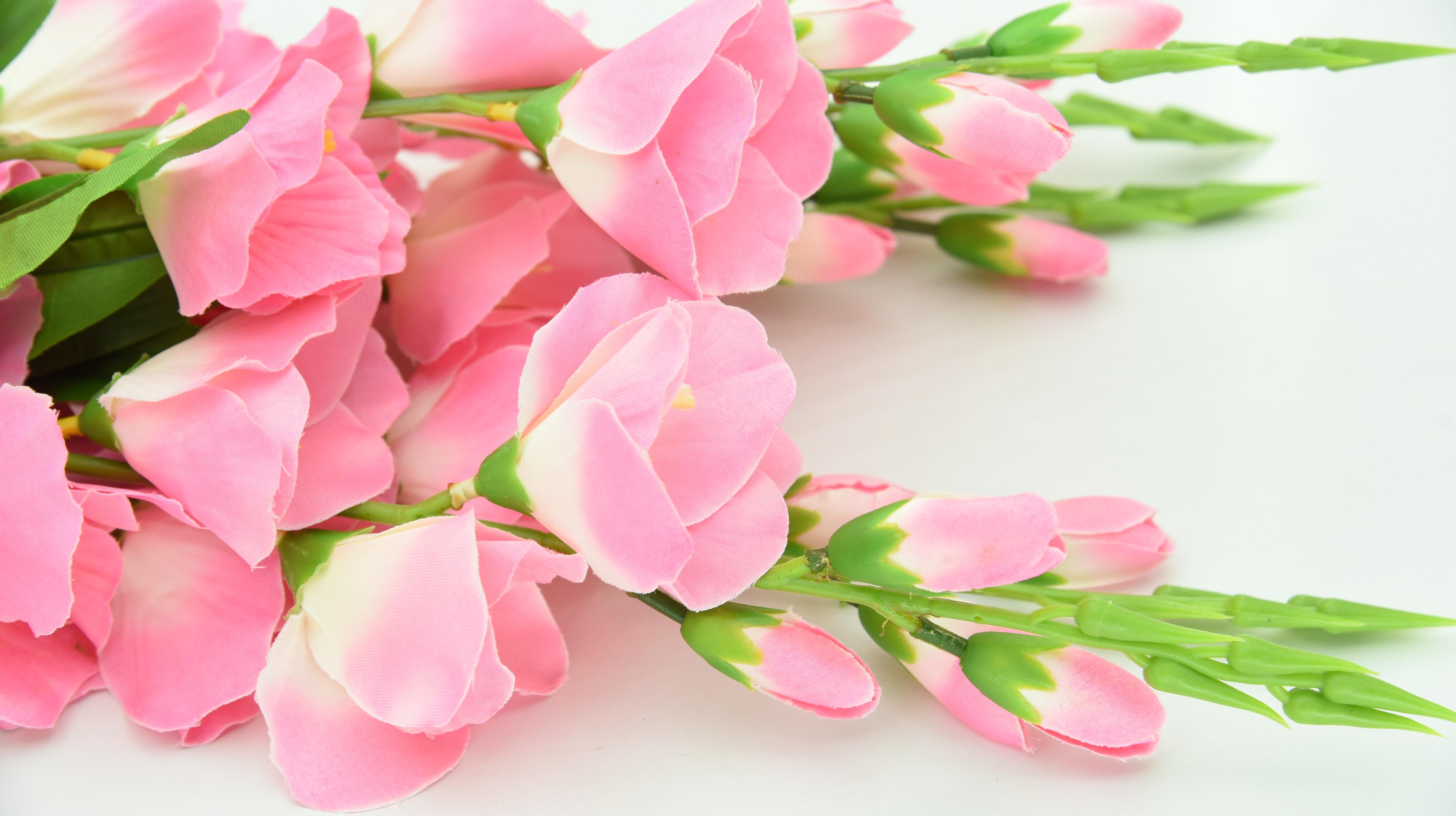 Hdの壁紙 ピンク ピンクの花の無料の写真素材