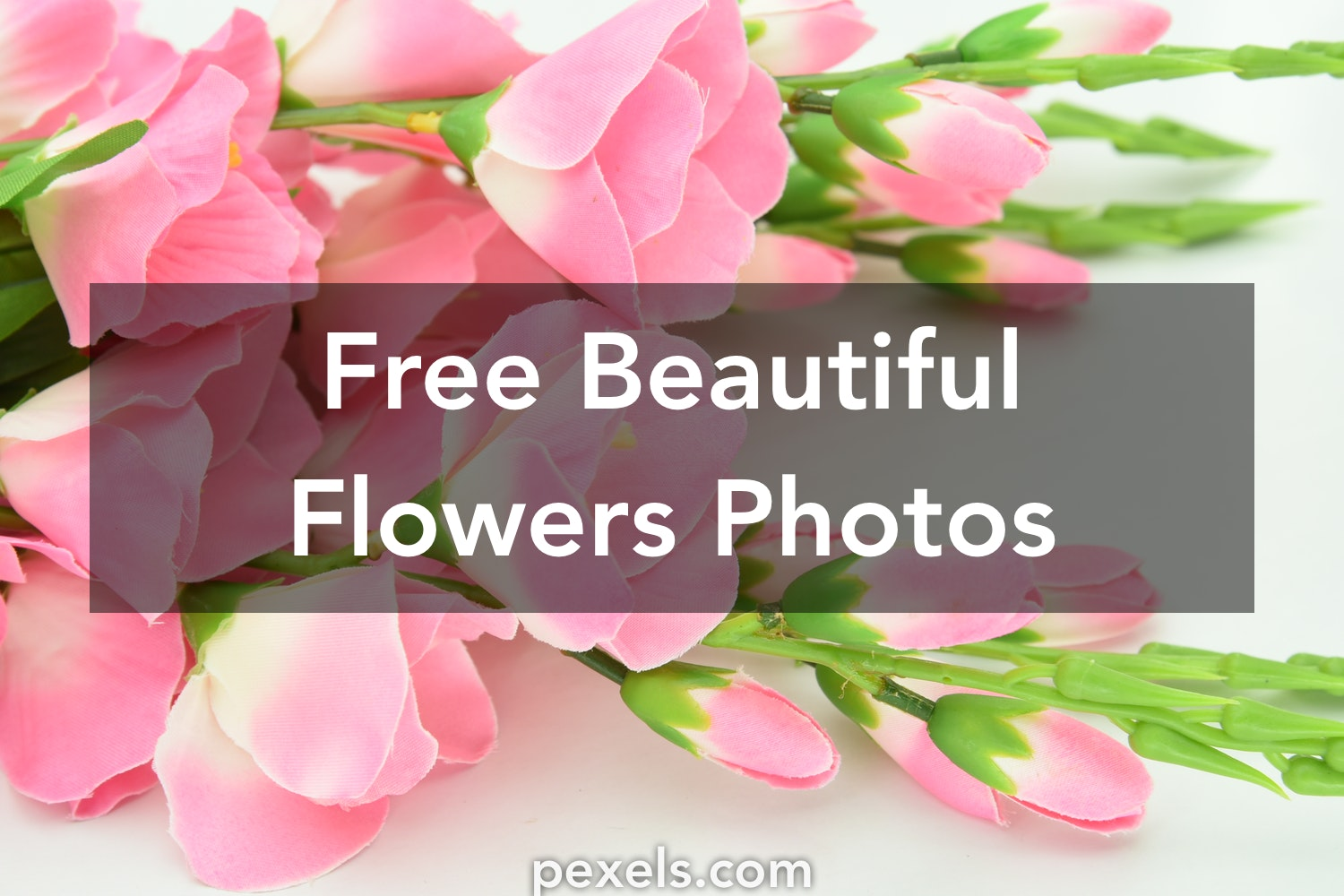 1000 beautiful beautiful flowers photos pexels free stock photos izmirmasajfo