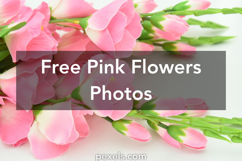 1000 Interesting Pink Flowers Photos Pexels Free Stock Photos