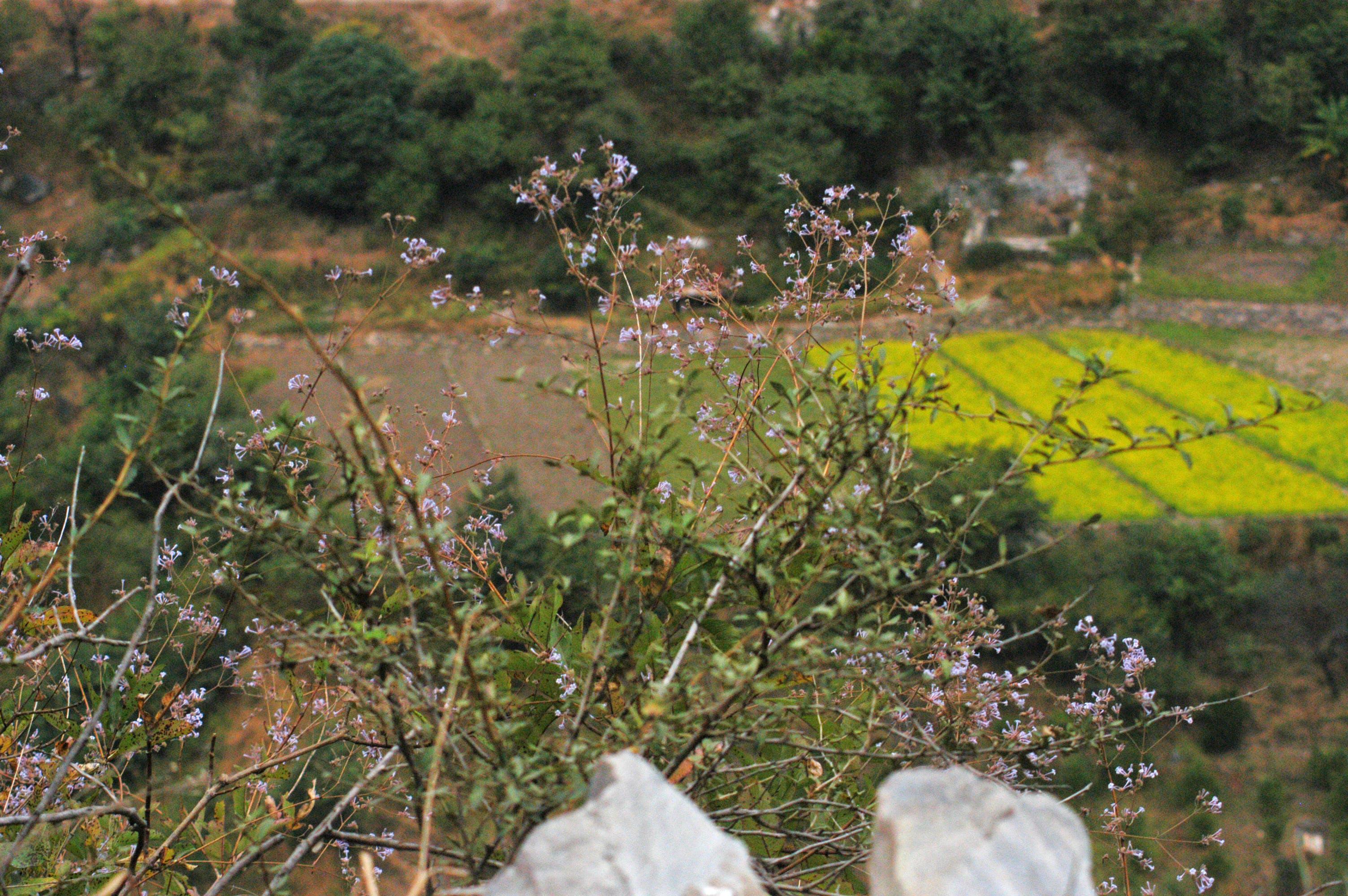 Free stock photo of autumn, farming, fields, hanol