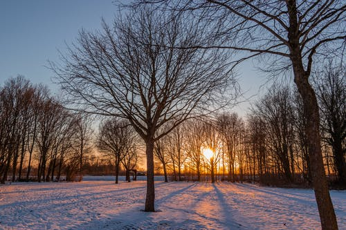 Bare Trees on Snow During Sunset