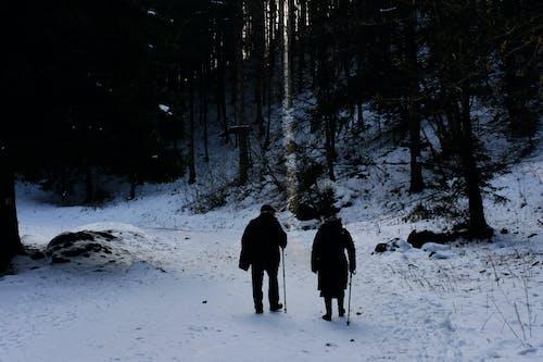 Fotos de stock gratuitas de aventura, bosque, clima helado