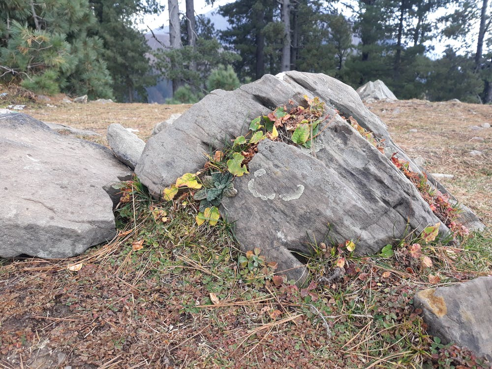 Free stock photo of nature, stone