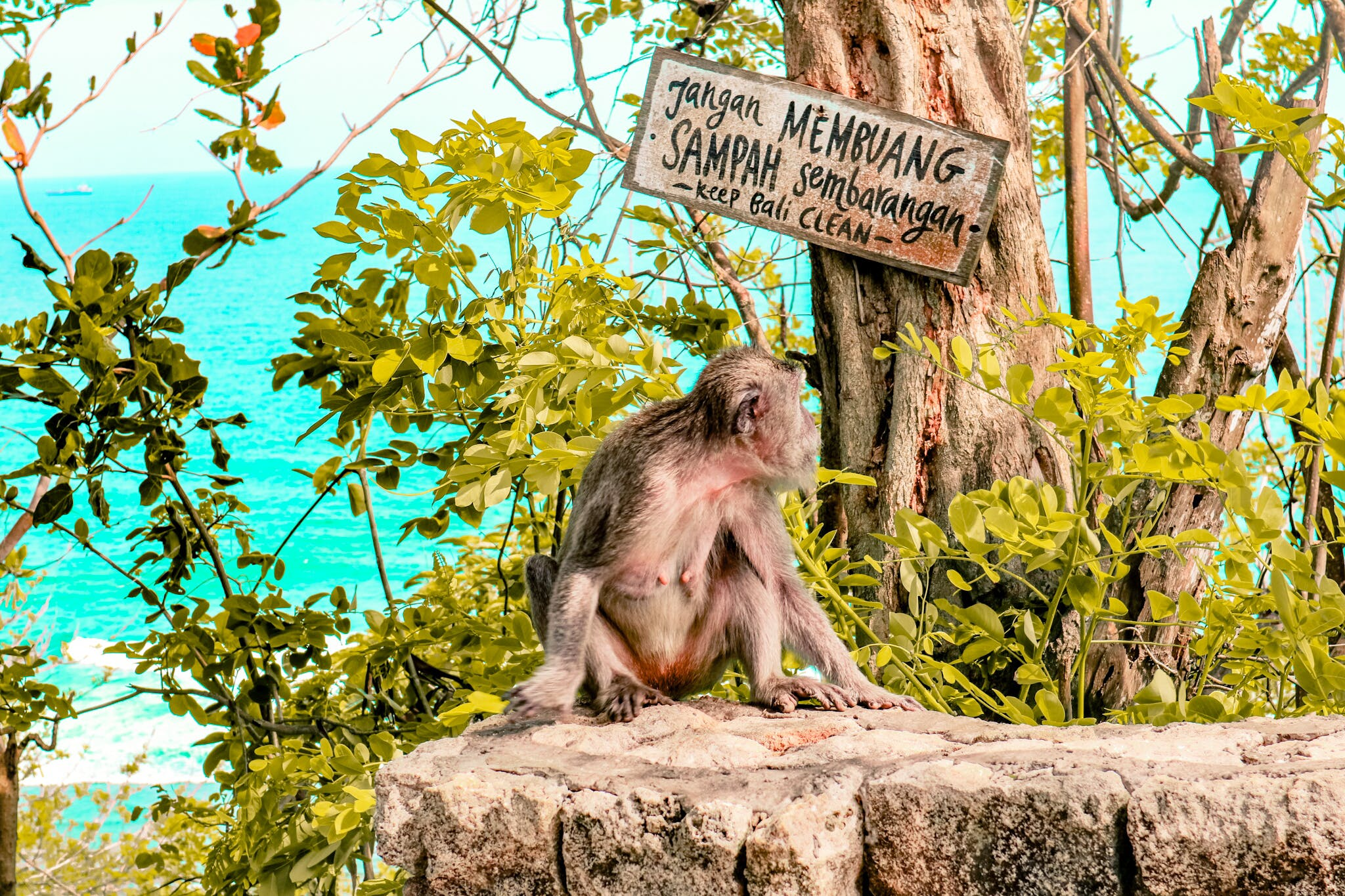 Free stock photo of animal, bali, beach, indonesi