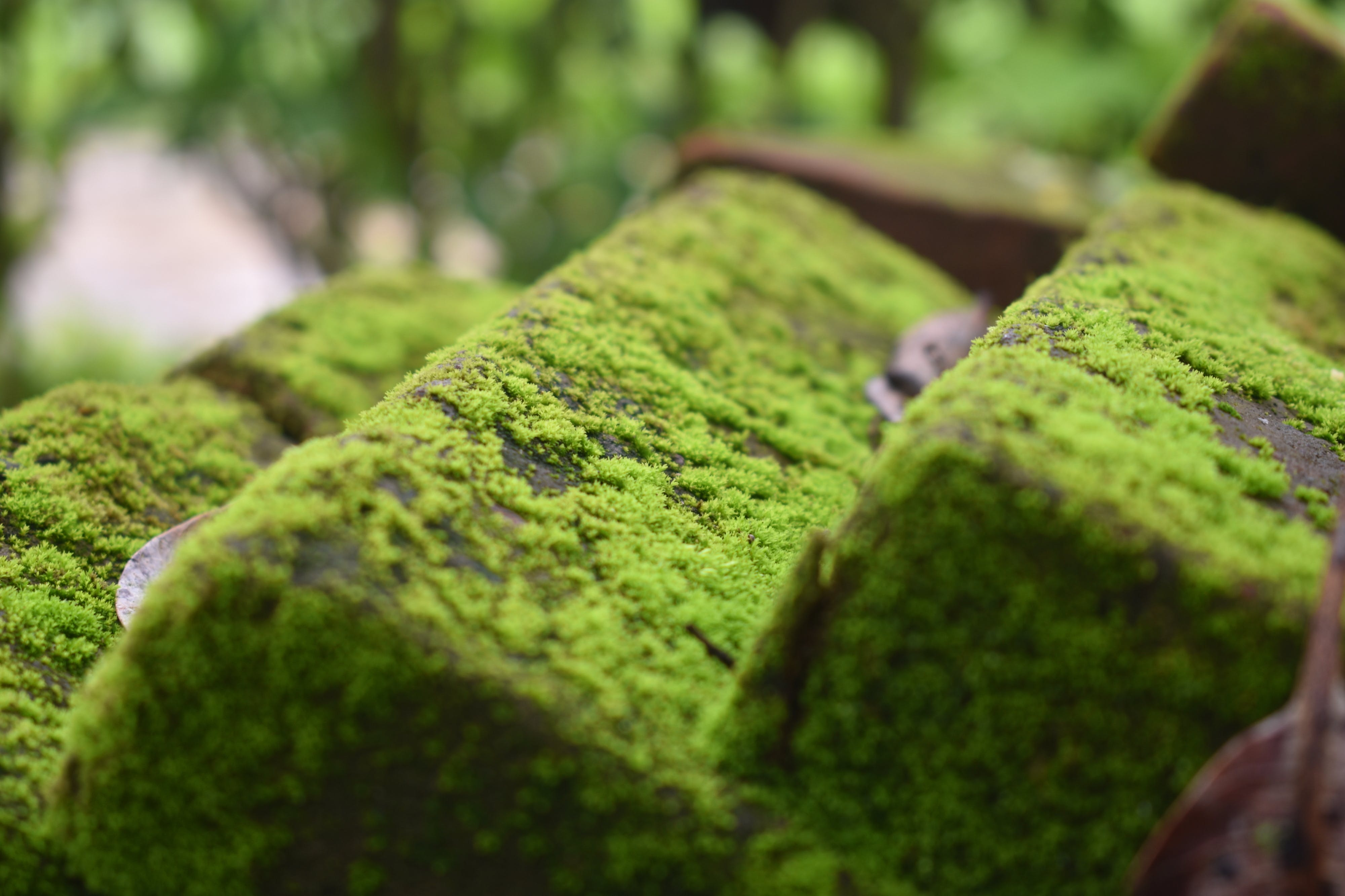 Algae on Concrete Pavement