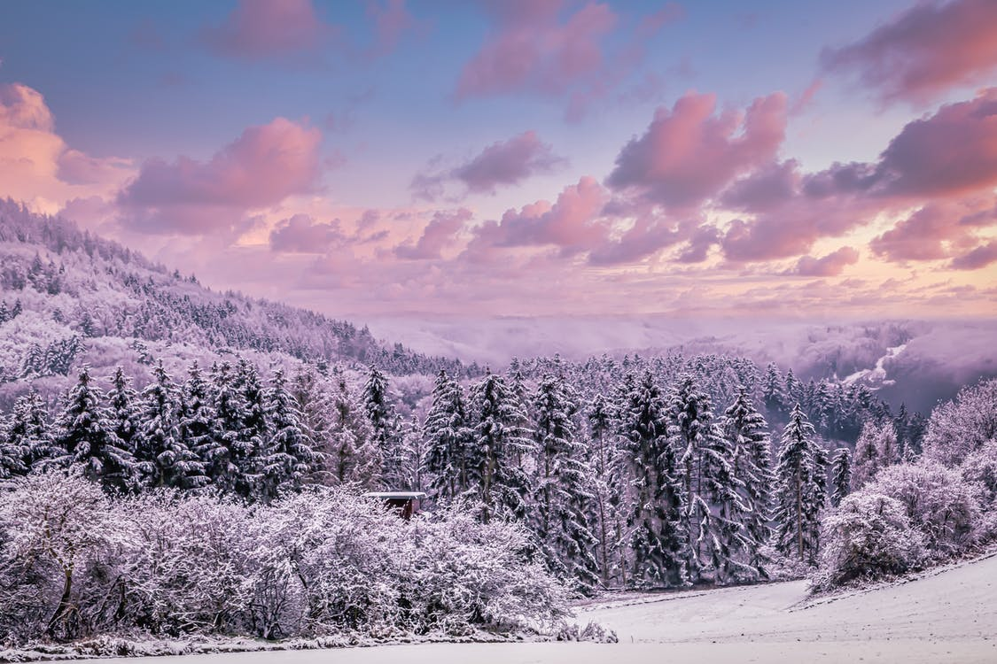 Snow Covered Trees Under Cloudy Sky