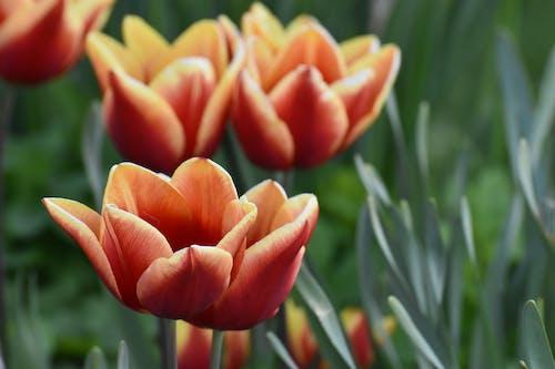 Ingyenes stockfotó fényes, húsvét, kert témában